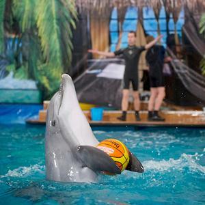 Дельфинарии, океанариумы Богатыря