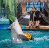Дельфинарии, океанариумы в Богатыре