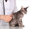 Ветеринарные клиники в Богатыре